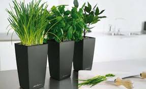 plant house plants with flowers mesmerize house plants with