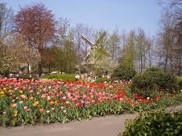 flower garden in amsterdam gardening airy fairies trip to keukenhof and amsterdam 2 may 5