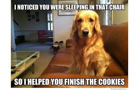 Much Dog Meme - yes this is dog 31 of the best dog memes ever slide 88