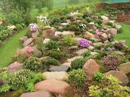 rockery plants rock garden ideas nice for filling in areas in back