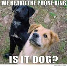 Dog Phone Meme - we heard the phone ring is it dog weknowmemes