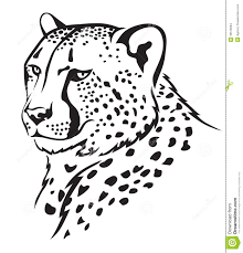 drawn cheetah black and white pencil and in color drawn cheetah