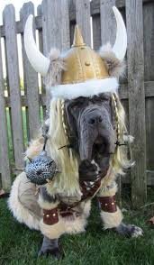 10 costumes prove mastiffs win halloween