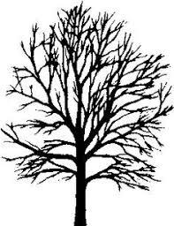 the 25 best maple tree tattoos ideas on tree bird