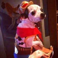 Chihuahua Halloween Costume 52 Pet Stuff Images Animals Funny Dogs