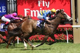 California Flag Horse The Hong Kong Jockey Club