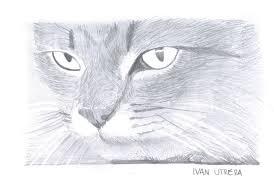 imágenes de gatos fáciles para dibujar gatos dibujos a lapiz imagui dibujos pinterest lápiz gato y