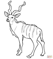 african woodland antelope kudu coloring page free printable