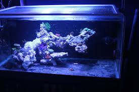 Tank Aquascape Cool Reef Tank Aquascapes Reef2reef Saltwater And Reef Aquarium