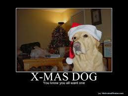 Christmas Dog Meme - meme archives ronin s grips