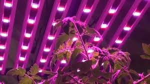 horticultural led grow lights illumitex neosol ns led grow light youtube