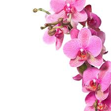 floral wall mural flower wall stickers floral wall decals pink orchid wall mural