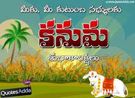kanuma greetings in telugu telugu kanuma festival quotes