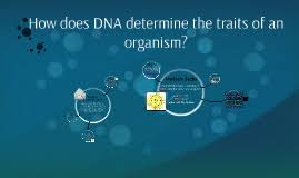 how does dna determine the traits of an organism by cary barry on
