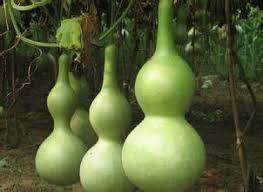 get cheap ornamental fruit gourd seeds aliexpress