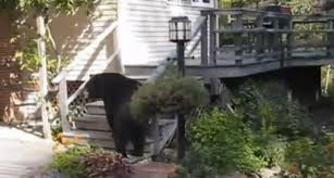 awesome grandma scares off bear video