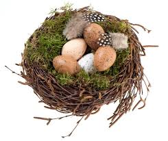 decorative eggs nest with decorative eggs and birds feather stock photo colourbox