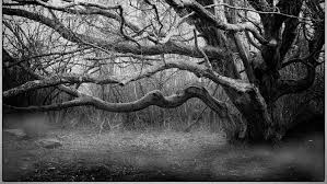 create stunning black white images with nik silver efex udemy