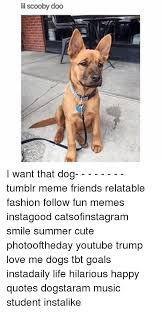 Tumblr Meme Quotes - lil scooby doo i want that dog tumblr meme friends