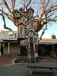 Coolest House Ever Is This The Coolest Tree House Ever Coolest New
