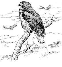 birds yosemite national park 1954 1963