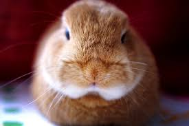 are rabbits good pets for kids 3 important factors to consider on