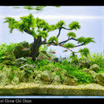 Aga Aquascape Aquascape Designs