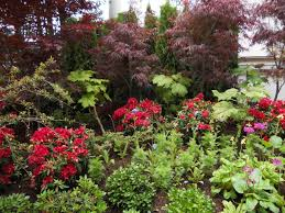 native plants of alaska low maintenance basics landscape alaska