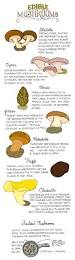 best 25 how to grow mushrooms ideas on pinterest how to grow