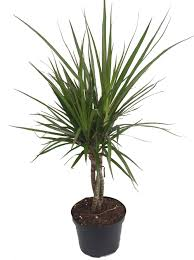 hirts house plant potted plants sears