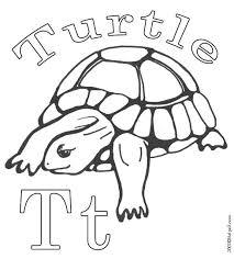 19 turtle images reptiles box