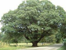 tree seedlings ebay