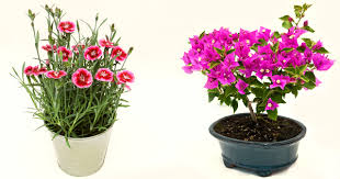 flower plants looking for some sunny flower plants here are 12 best summer pick