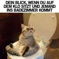 s e katzen spr che bilder archive schwarzer kaffee lustige katzenbilder