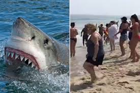 bloodbath after great white shark attacks a seal right next to