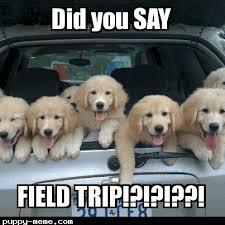 Trip Meme - trip