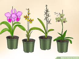 orchid plant how to care for orchids with pictures wikihow