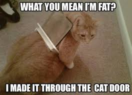 Funny Kitten Meme - made it through the cat door funny cat meme
