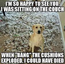 Funny Memes Animals - funny animal pictures of the day 24 pics funny dog top