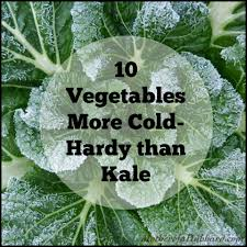 10 vegetables more cold hardy than kale