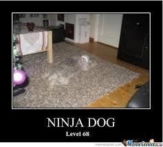 Level Meme - meme ninja dog level 68 photo golfian com
