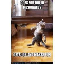 Meme Generator Cat - please give me a job beggin cat meme generator capti