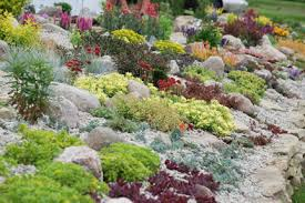 Rock Garden Cground Sunsparkler Sedum Rock Garden Ground Cover Succulents Pebbles