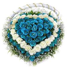 white and blue roses white and blue heart heart shape flowers plants