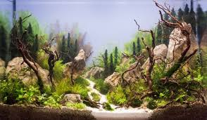 17 best driftwood aquascapes images on pinterest