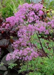 the 25 best purple flowering bush ideas on pinterest purple