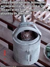 Cat Meme Ladies - ladies and gentlemen lolcats lol cat memes funny cats