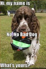 Bad Dog Meme - hi my name is no no bad dog what s yours cheezburger funny