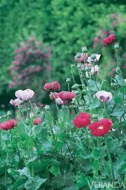 157 best monet u0027s garden images on pinterest giverny france