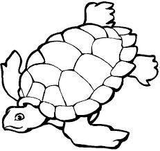 341 skilpadder images sea turtles reptiles